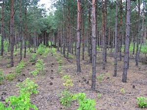 Waldumbau Umsetzung